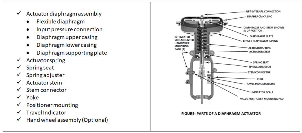 parts of diaphragm